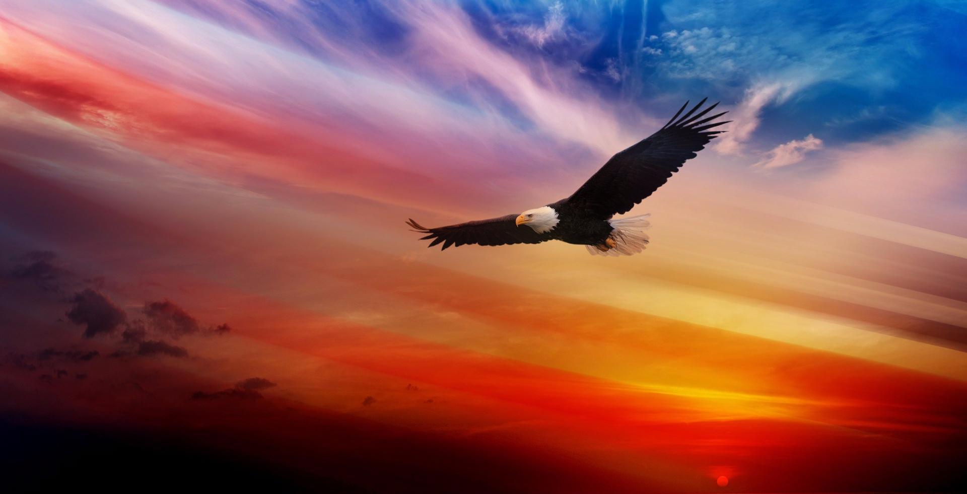 freedom3.jpg